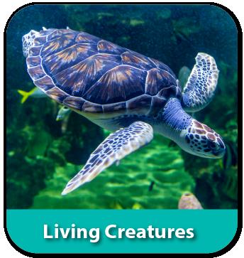Living Creatures Theme Quaver PreK